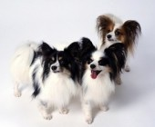A List of the Smartest Breeds of Dogs