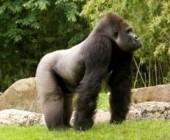 List of Jungle Animals